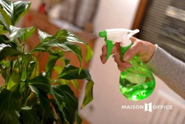 """Thuê cây xanh – Giải pháp tiết kiệm để có văn phòng """"xanh"""""""
