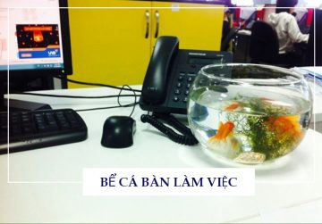10+ mẫu bể cá để bàn làm việc trong văn phòng đẹp